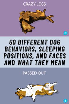 Have you ever been around your dog and wondered what she is thinking or feeling? Surely you have caught your canine doing something bizarre that has made you question his mental status. Even the position that your dog sleeps in means something. Here are 50+ of the most common dog behaviors explained in human terms.