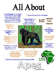 "This ""All About Book"" will be a fun addition to your classroom and lesson on apes. Your student will love to learn All about Apes! Animal Fact File, Animal Facts For Kids, Fun Facts About Animals, Endangered Animals Facts, Nocturnal Animals, Extinct Animals, Wild Animals, Jaguar Animal Facts, Animals Information"