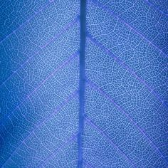 Abstract Art in the Simple Leaf Photosynthesis, Leaf Art, Blog Design, Abstract Art, Leaves, Simple, Pretty, Photography, Blue