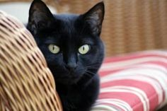 28 Lucky Black Cats