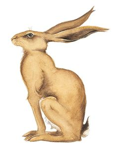 Golden Hare by Jackie Morris - Song of the Golden Hare
