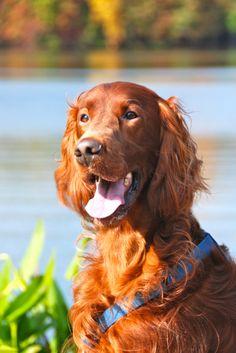Hepatic Dog Food Recipes