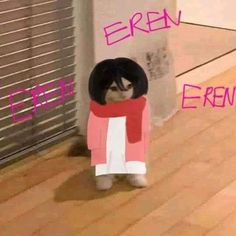 Attack On Titan Funny, Attack On Titan Fanart, Anime Kitten, Cat Icon, Hunter Anime, Cartoon Jokes, Funny Anime Pics, Mood Pics, Mikasa