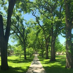 The Oval has that summer glow going on. #ColoradoState