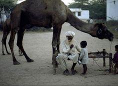 Grand père et le chameau, Steve McCurry