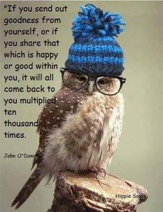@OwlandOwlet saw this and thought of you too hope your having a awesome day my lovely birds