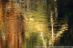 © Alison M. Jones #trees #reflection #water #fall #colorful
