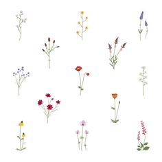 Set collection of wild flowers vector illustration Free Vector Simple Flower Drawing, Simple Flowers, Colorful Flowers, Wild Flowers, Simple Flower Tattoo, Simple Flower Painting, Dainty Flower Tattoos, Simple Flower Design, Floral Tattoos