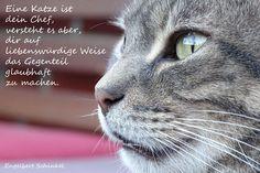 Eine Katze ist dein Chef, versteht es aber, dir auf liebenswürdige Weise das Gegenteil glaubhaft zu machen.  Engelbert Schinkel  Katzenzitate Katzenweisheiten