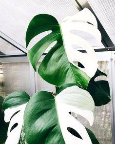 Amazing Unusual Plants To Grow In Your Garden Tropical Garden, Tropical Plants, Cactus Plants, Garden Plants, Indoor Plants, Unusual Plants, Cool Plants, Plantas Indoor, Belle Plante