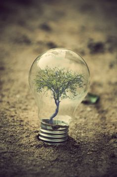 FANTASY: Tell this tree's story. How did it get in the light bulb?