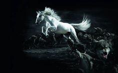 101 Mejores Imágenes De Caballos Pretty Horses Animals Beautiful
