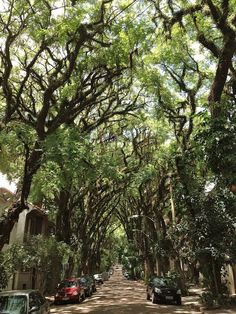 Rua Gonçalo de Carvalho, in the Brazilian city of Porto Alegre    most beautiful street in the world