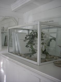 Fish tank display box Whitewashed Chippy Shabby chic French country rustic Swedish decor idea.  ***Pinned by oldattic ***.