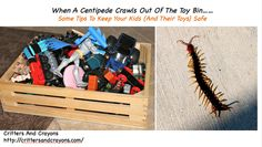 When A Centipede Crawls Out of The Toy Bin...A Mom's Tips To Keep Your Kids (And Their Toys) Safe....  Some humor, but also resources and tips that may help.
