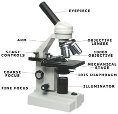 A study of the microscope and its functions with a labeled diagram microscope ccuart Choice Image