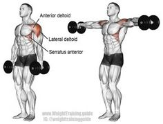Workout Dumbbell lateral raise exercise illustration - Use the dumbbell lateral raise to strengthen and build your anterior and lateral deltoids, which will give you broad shoulders. Best Shoulder Workout, Lateral Raises, Dumbbell Workout, Back Exercises, Workout Guide, Do Exercise, Muscle Fitness, Health Fitness, Workout Routines