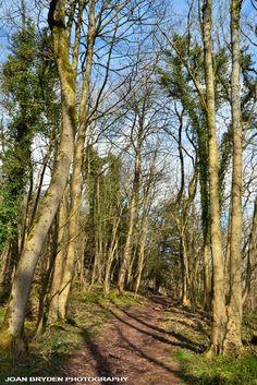 Eggerslack Wood, Grange over Sands, Cumbria