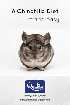 A Chinchilla's Diet Made Easy - Discover which foods you should feed your chinchilla and which foods to avoid.