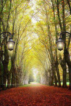 Allée des Platanes by Philippe Sainte-Laudy, via Flickr #Strasbourg #France