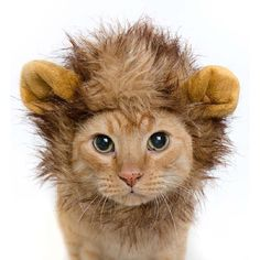 Wholesale Pet Cat Dog Emulation Lion Hair Mane Ears Head Cap Autumn Winter Dress Up Costume Muffler Scarf