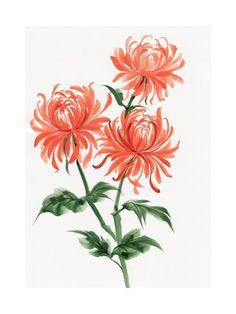 Chrysanthemum Tattoo, Spider Art, Spring Landscape, Small Tattoos, Flower Tattoos, Botanical Art, Tattoo Inspiration, Find Art, Framed Artwork