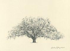 Savannah Candler Live Oak                                                                                                                                                                                 More