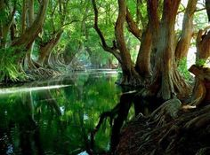 Sail Along The Green Paradise, Rio Verde, Guadalajara, Mexico We Are The World, Wonders Of The World, Places Around The World, Around The Worlds, Weird Trees, Beau Site, Foto Blog, All Nature, Green Nature