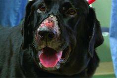 #Flesh-eating #disease strikes again with fears of #outbreak #dogs #alabamarot