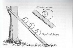 Trapping for Food squirrel Snare