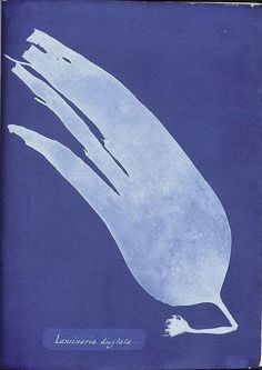 Anna Atkins     This process combines two loves of mine, nature and Prussian blue. The phrase 'blue prints' originally comes from when whe...