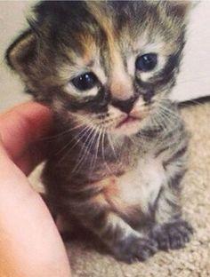 Non ha ancora un nome ma per la rete questo gattino dallo sguardo triste è stato già battezzato ''Purrmanently Sad Cat'', o PSC, un gioco di parole per descrivere la sua espressione afflitta. Le immagini del gatto, pubblicate dalla padrona Ashley Harring, sono state molto apprezz