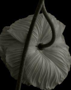 dennis3dots:    Secret Garden - Noir - by Yumiko Izu_