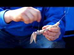 How to bait up a whole squid bait with the Linejunkies - YouTube