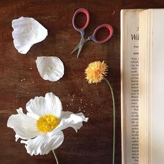 My contribution to unofficial paper poppy week on Instagram. The matilija poppy. Messing around before I start Iceland poppy workshop preparations, very fun to make! #paperflowers #dslooking #floralfridaycompetition @emilyquinton