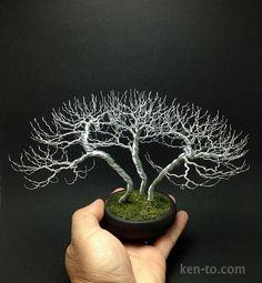 Huge 3 tree wire bonsai tree group by Ken To by KenToArt.deviantart.com on @deviantART