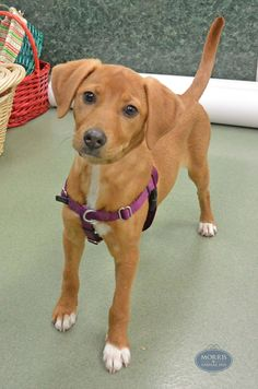 Meet 4-month-old hound mix, Nala! #morrisanimalinn #training #houndmix #lodging