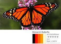 fotos de mariposas y sus colores