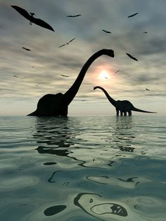 Diplodocus; Late Jurassic (154 - 150 Ma); Discovered by Marsh, 1878