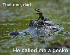 Funny pictures about Crocodile ride. Oh, and cool pics about Crocodile ride. Also, Crocodile ride photos. Funny Shit, Funny Cute, The Funny, Funny Pics, Funny Pictures, Funny Memes, Funny Stuff, Hilarious Photos, Funny Captions