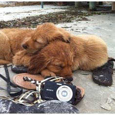 Two exhausted puppies sleeping on the sand after a fun day at the beach.