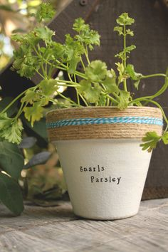 Gnarls Parsley by PlantPuns on Etsy