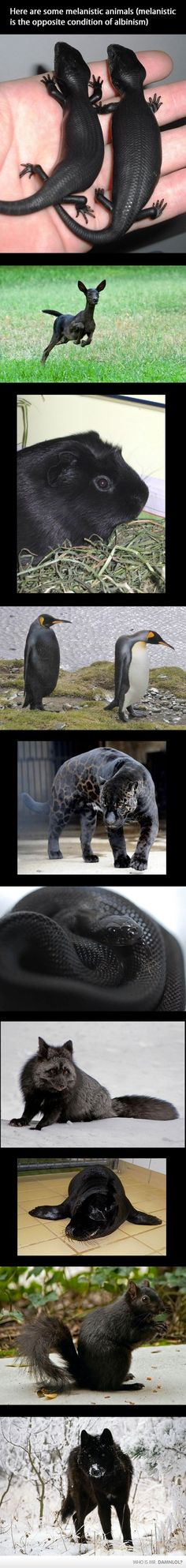 Melanism - When the body produces too much Melanin instead of too little. The opposite of Albinism.