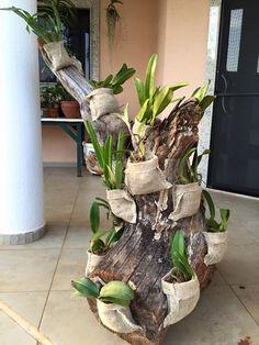 """Reaproveitamento de tronco para por outras plantas e vaso de saco de chita para orquídeas - maybe for orchids when they are not I flower?...... """"Reaproveit"""