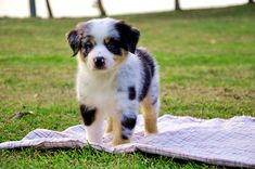 I want this puppy <3