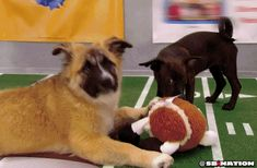 I should have watched the Puppy Bowl!