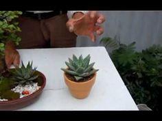 Plantas para la buena suerte  3 - YouTube