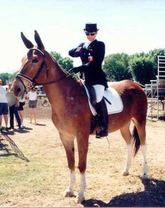 I love mules. Now how high have the scorned mules risen! Pretty Horses, Beautiful Horses, Animals Beautiful, Mules Animal, Dressage Horses, Horse Pictures, Horse Photos, Horse Breeds, Zebras
