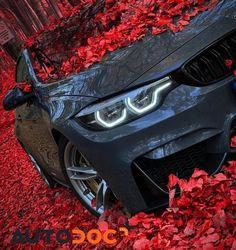 Bmw M3 Wallpaper, Car Wallpaper For Mobile, Ford Mustang Wallpaper, Car Iphone Wallpaper, Bmw Wallpapers, Mercedes Wallpaper, Bmw M4, Car Backgrounds, Car Colors