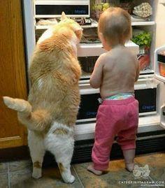 Compañero que aremos esta noche,los mismo que hacemos siempre andar al refrigerador.